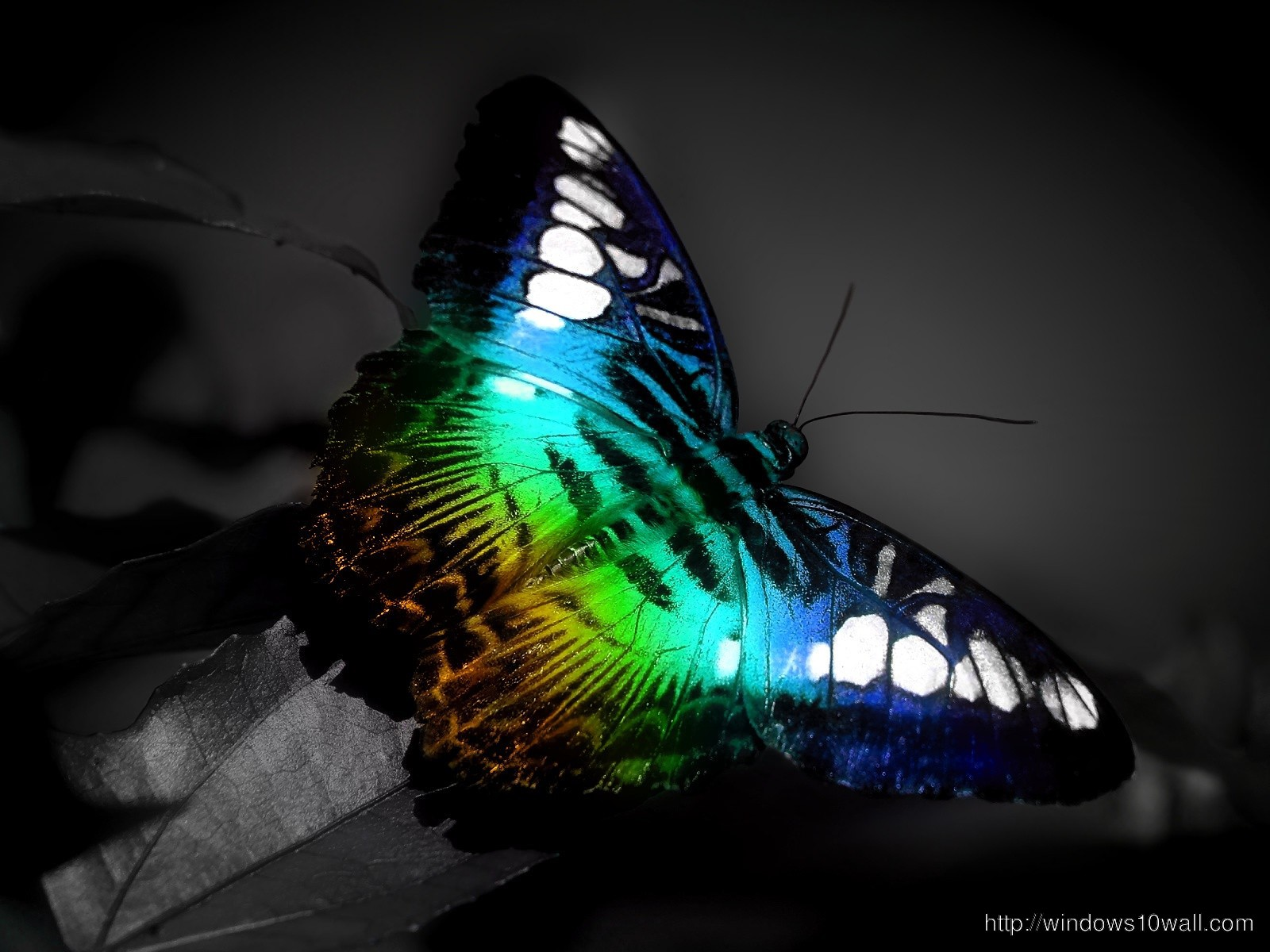 butterfly animated hd background wallpaper