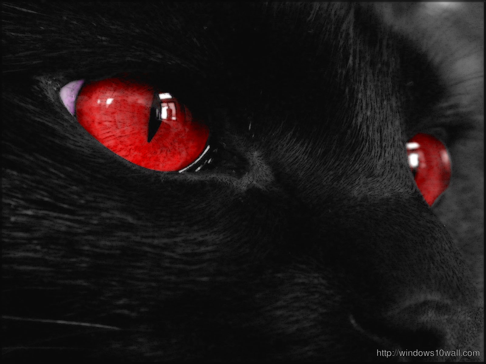 Red Cat Eyes Dark Black Wallpaper Download Windows 10 Wallpapers