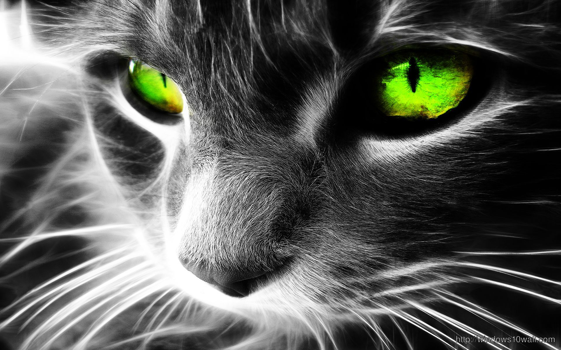 horrible cat hd WallPaper download