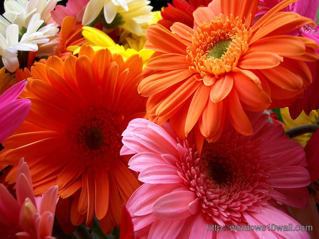 Beautiful Flowers Wallpaper For Desktop Free Download