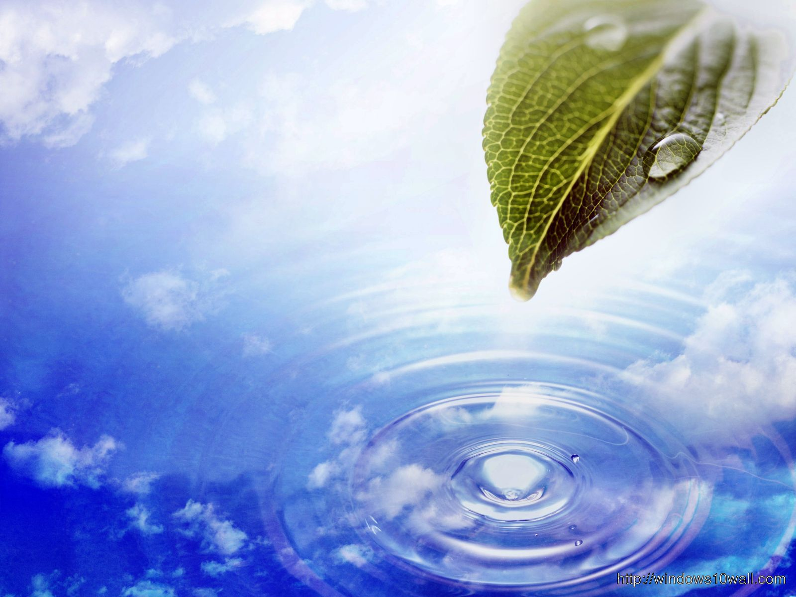 Water drop with leaf Background Natural Wallpaper