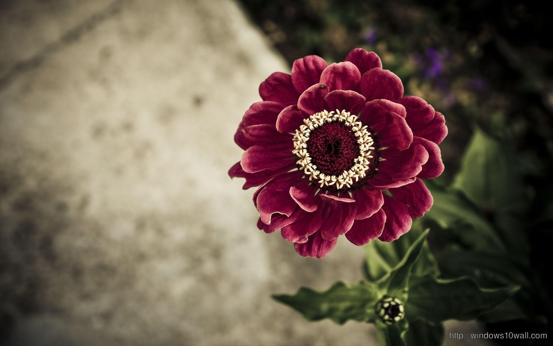 most stunning flower wallpaper free download for desktop
