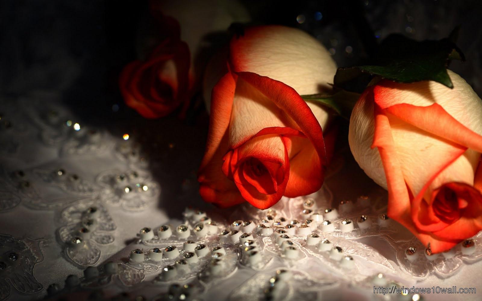 Roses Full Hd Wallpapers