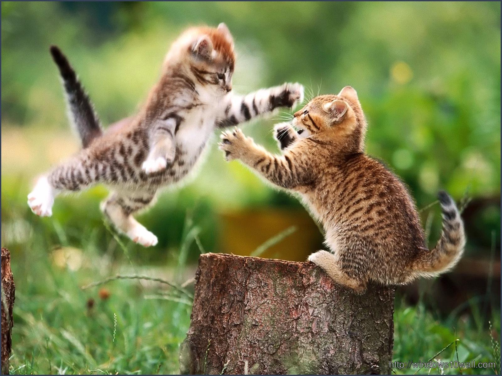 Funny Cat hd Wallpaper for desktop background