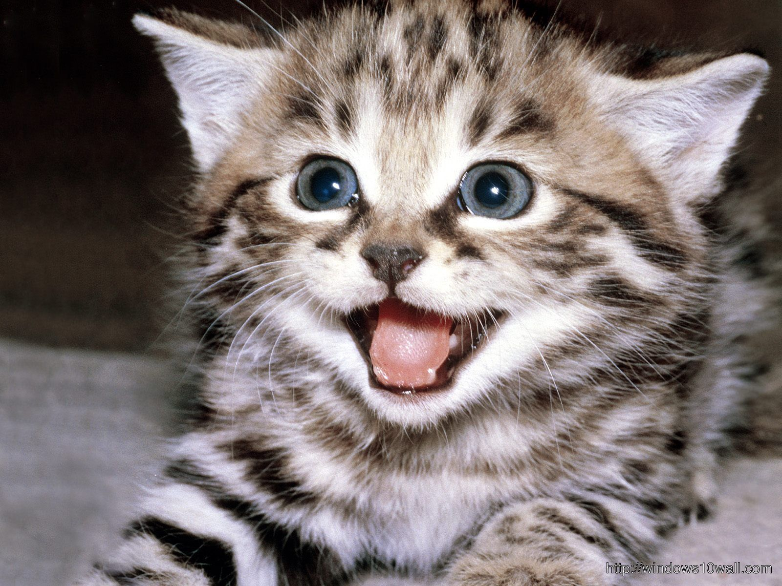 Funny Cats hd Wallpaper