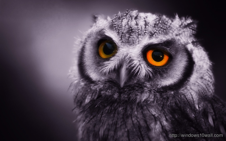 Sad Owl Wallpaper For Desktop Windows 10 Wallpapers