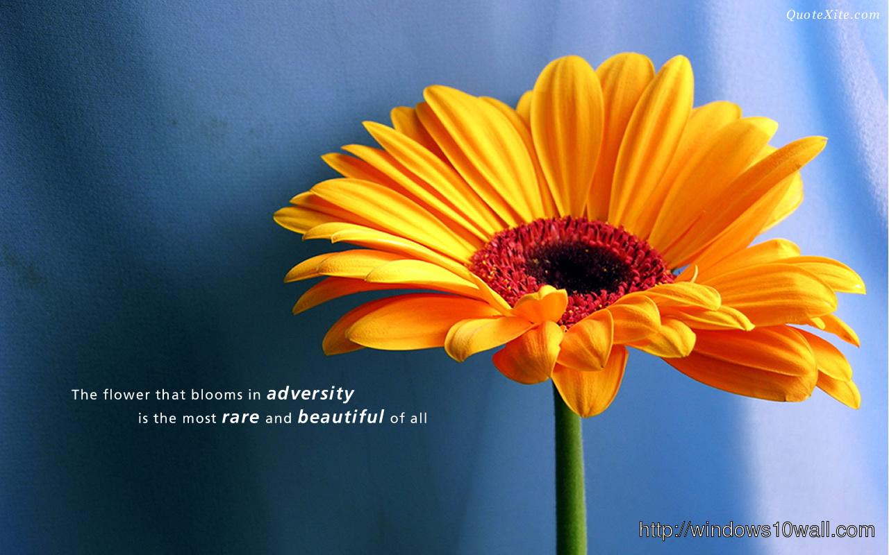 Beautiful Love Quote Hd Wallpaper