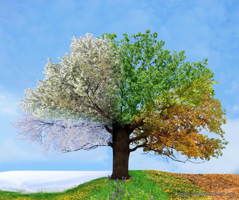 Four Seasons HD wallpaper free