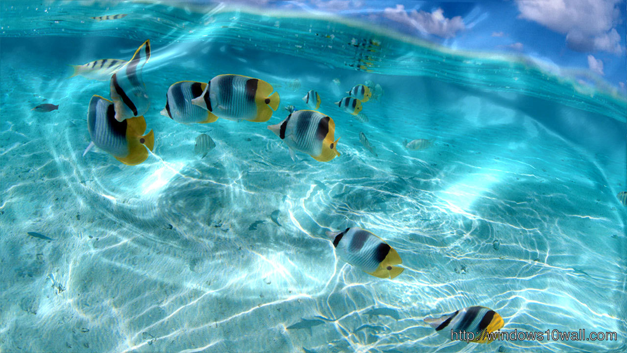 Watery Live Wallpaper free download for pc
