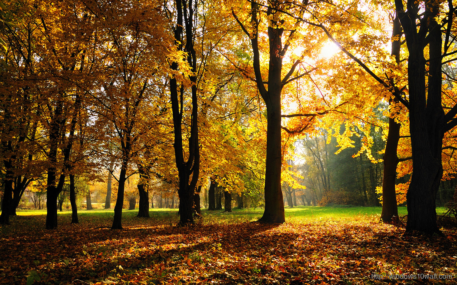 Autumn Season Hd Wallpapers