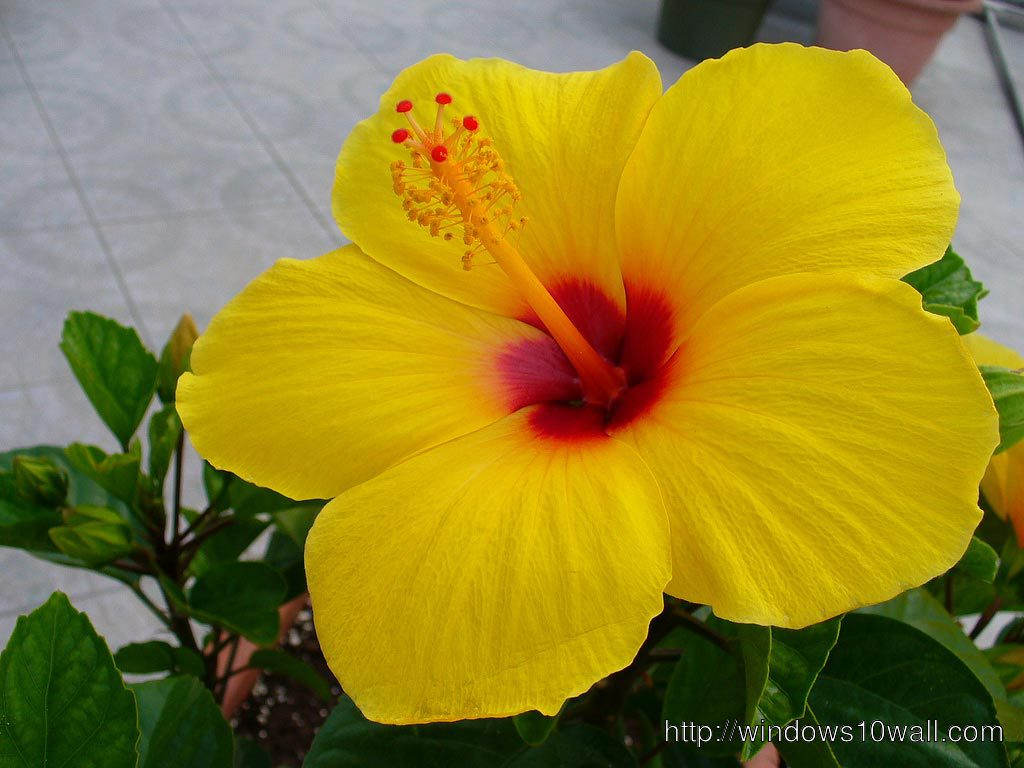 Beautiful Yellow Flower Hd Wallpaper