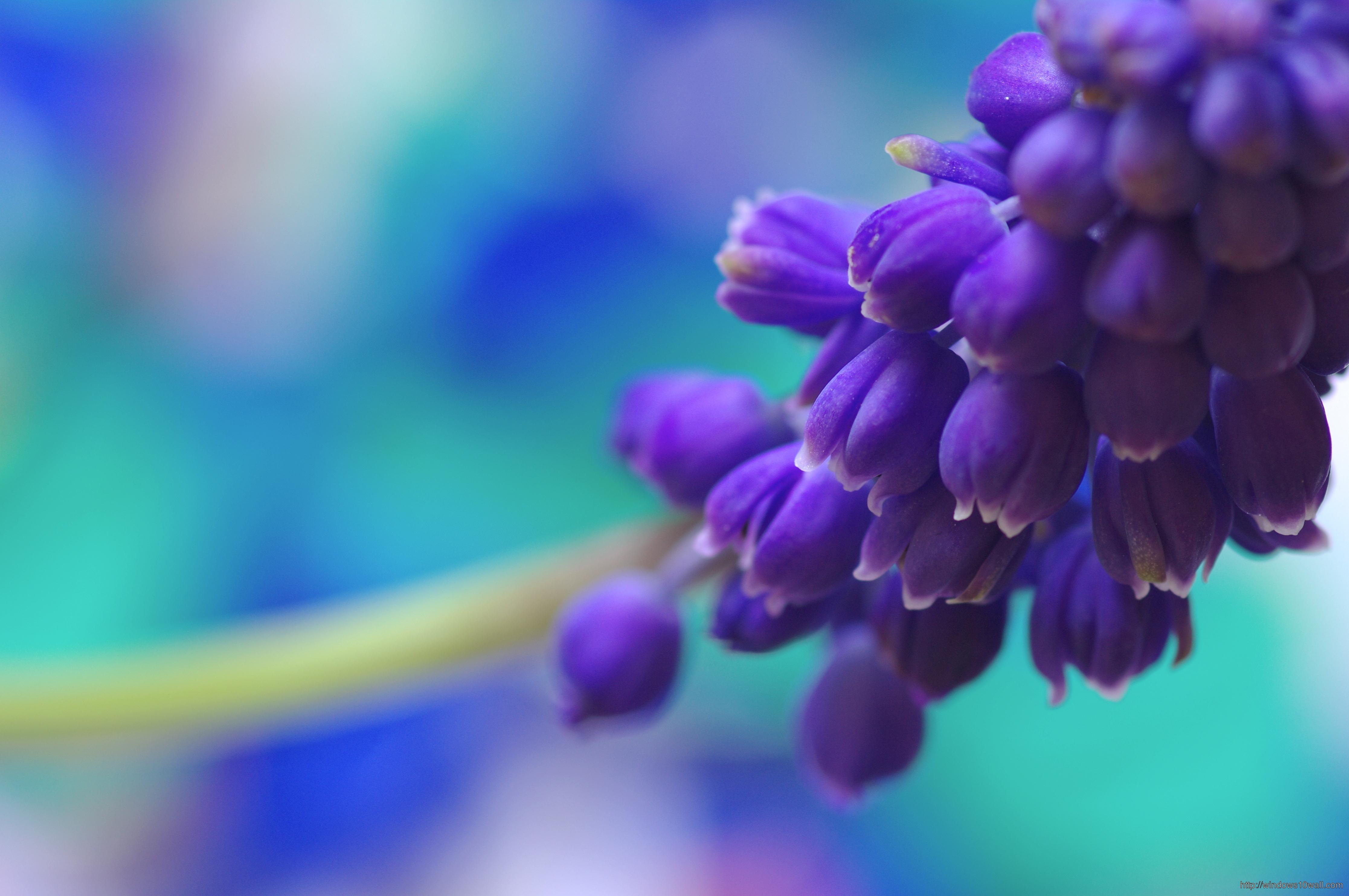 Earth beautiful purple Flower Wallpaper