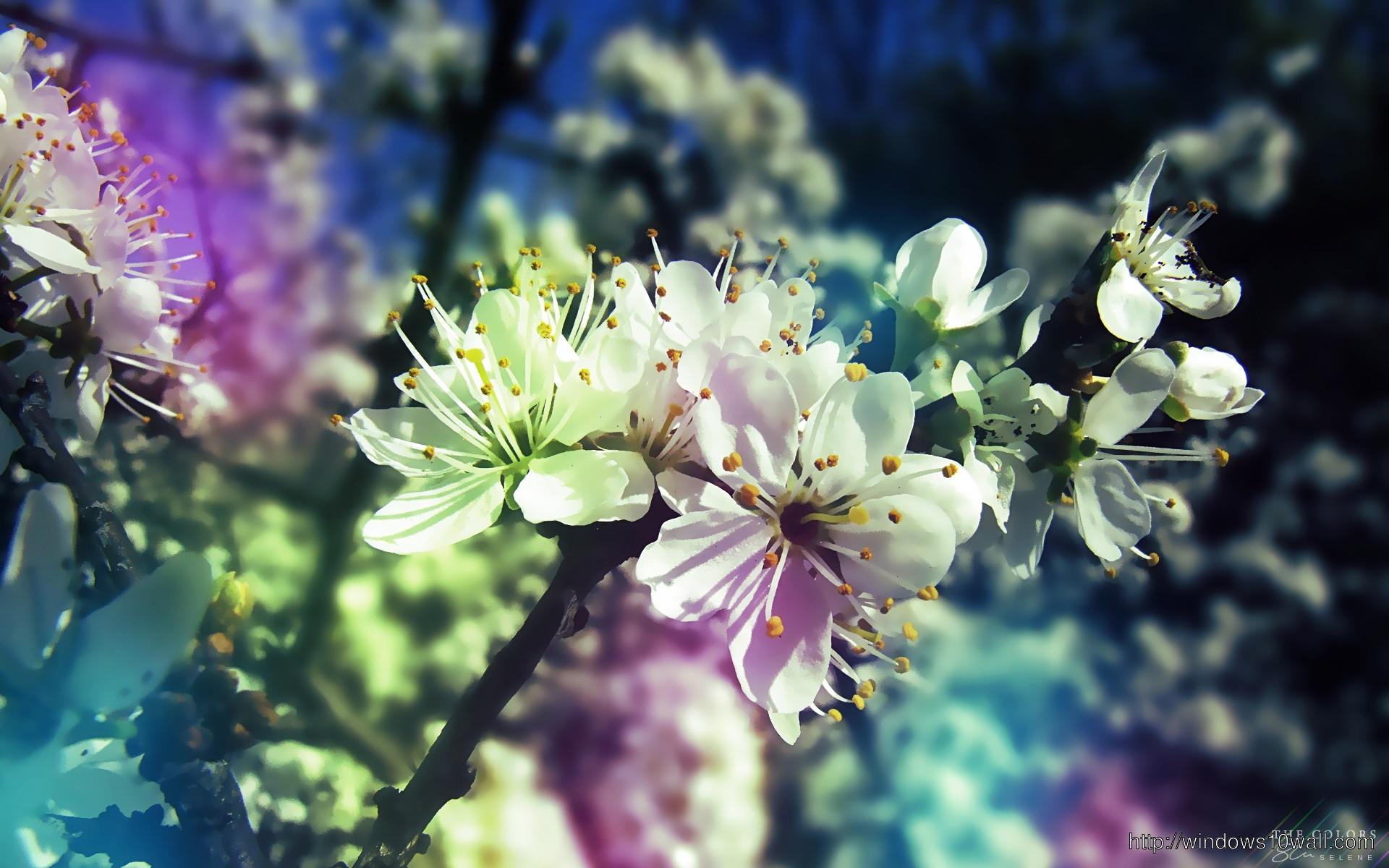 Beautiful Earth white Flower Wallpaper hd