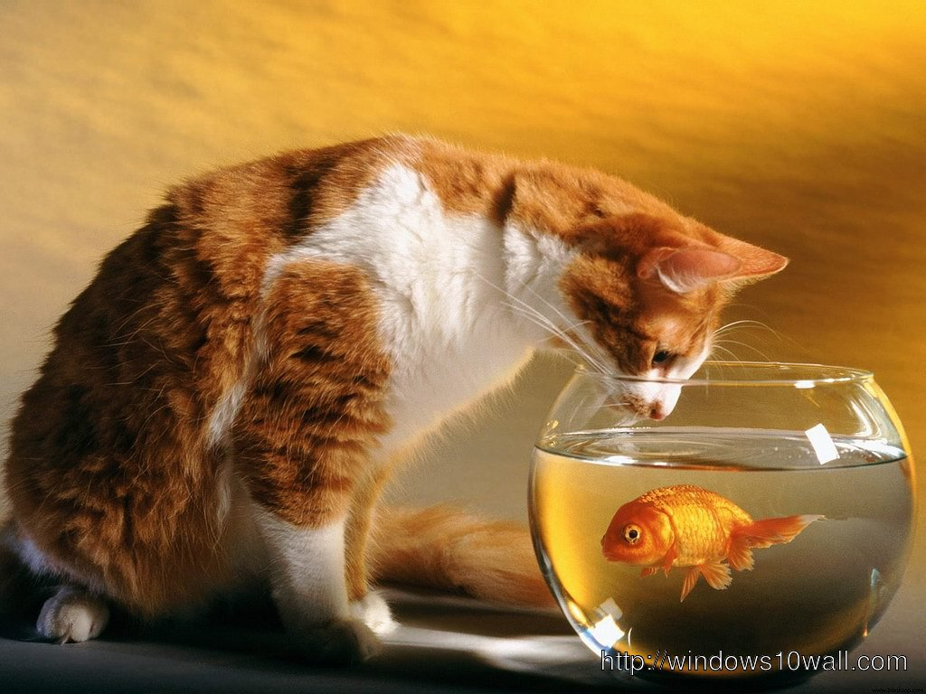 Cat And Fish Background Wallpaper