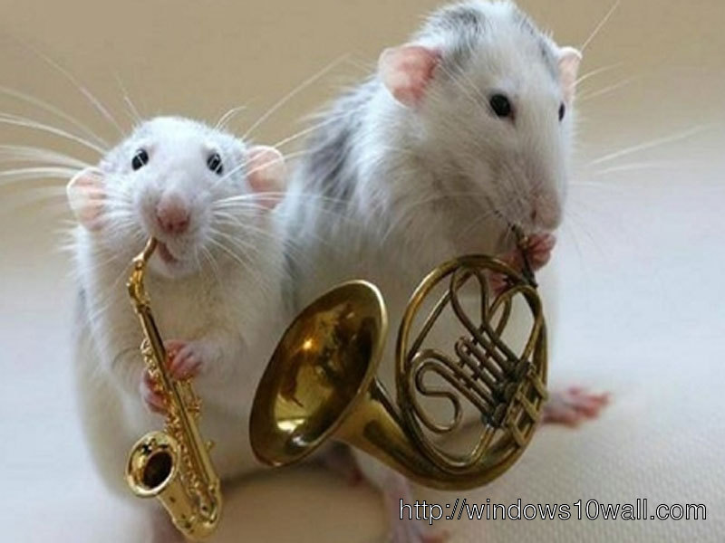 Funny mouse Animals free Wallpapers