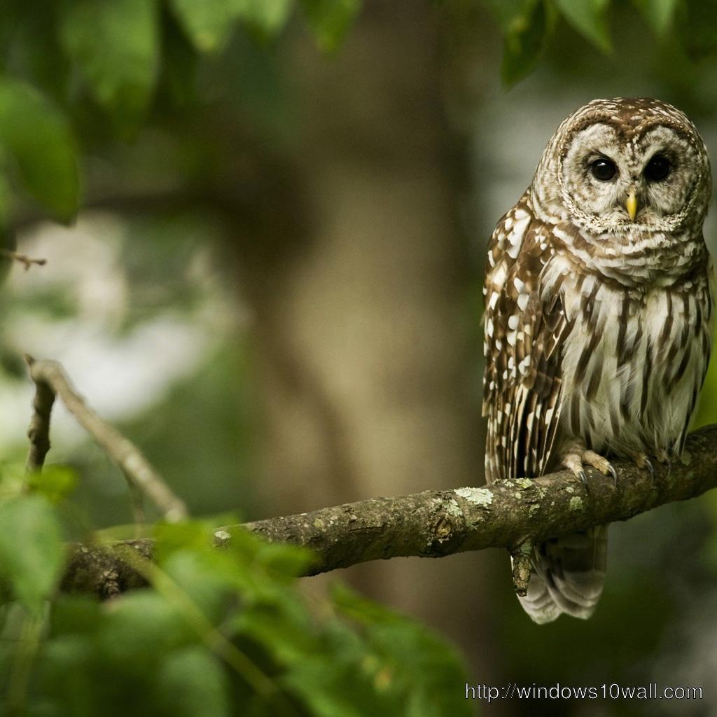 FREE Animal Owl HD iPad Wallpaper