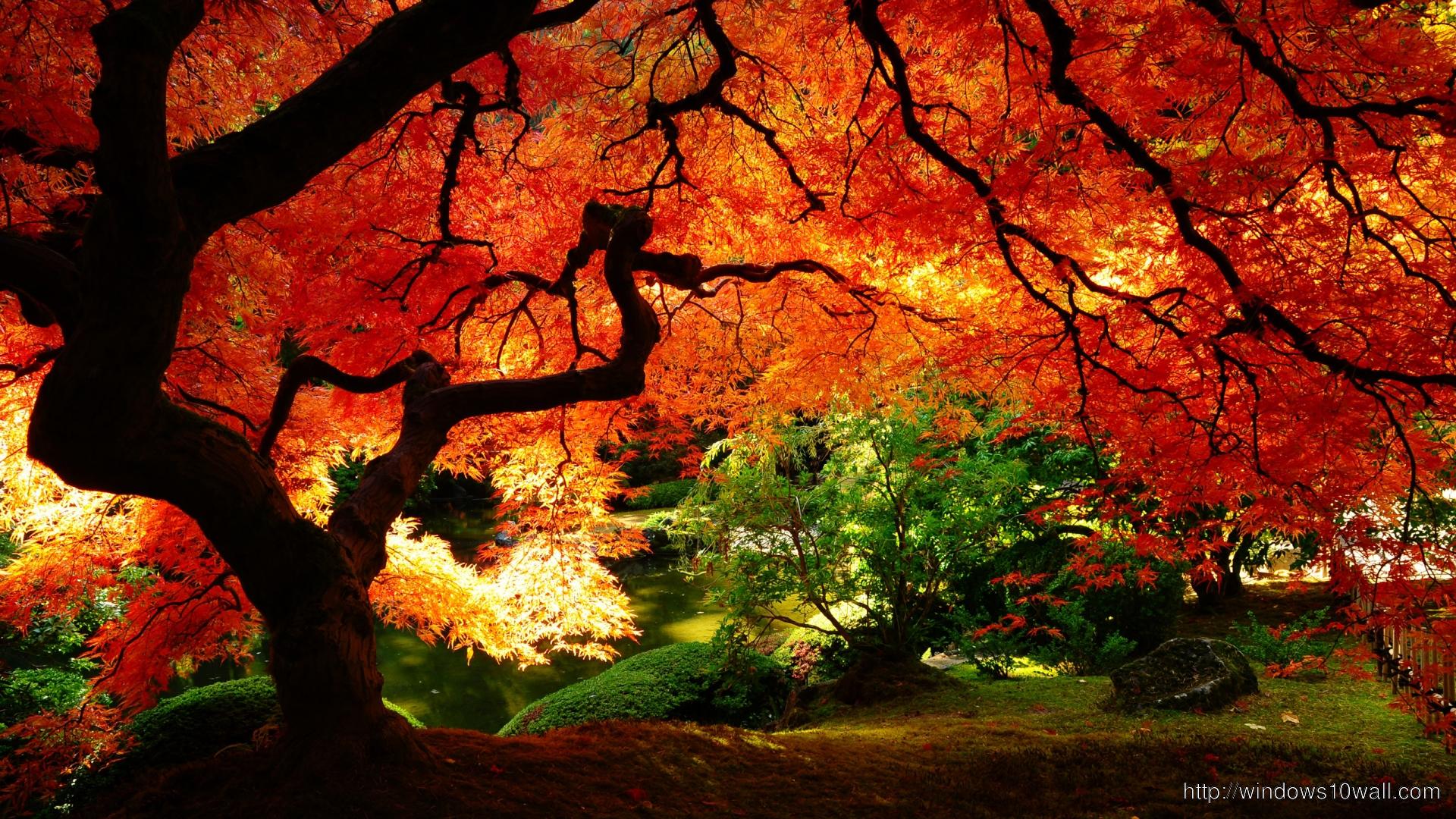 fall – windows 10 Wallpapers