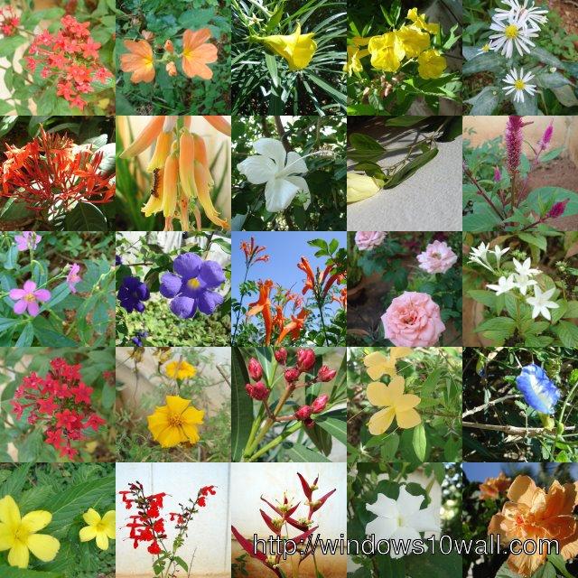 Types of flowers in the garden wallpaper