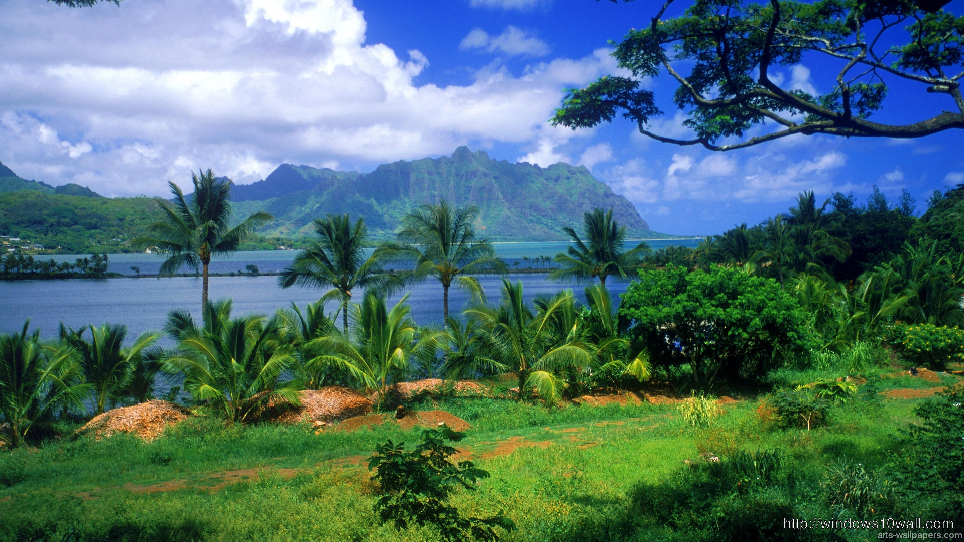 Hawaii Tropical Background Wallpaper