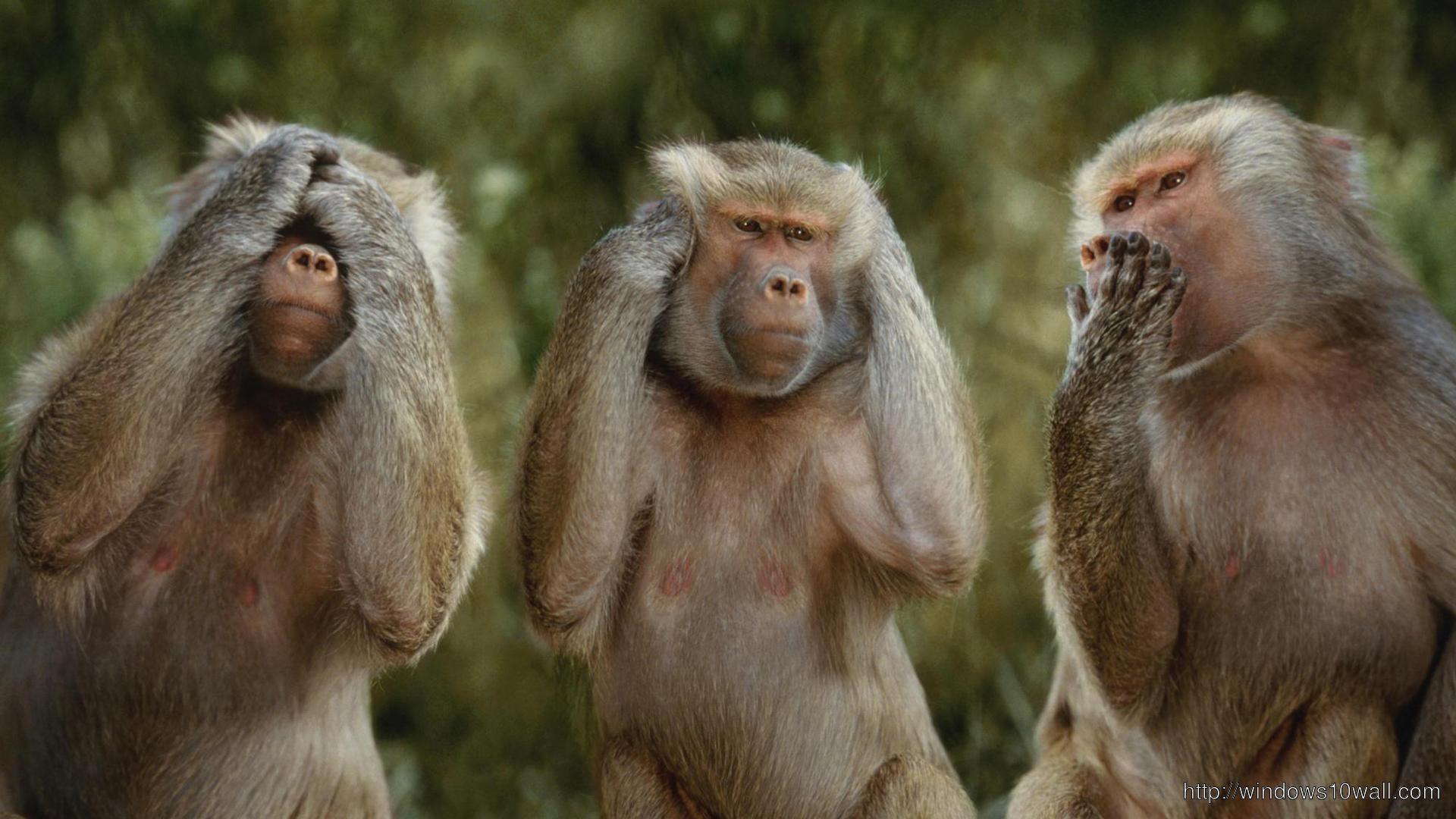 Comical Photo  Funny Monkey Photoshoot