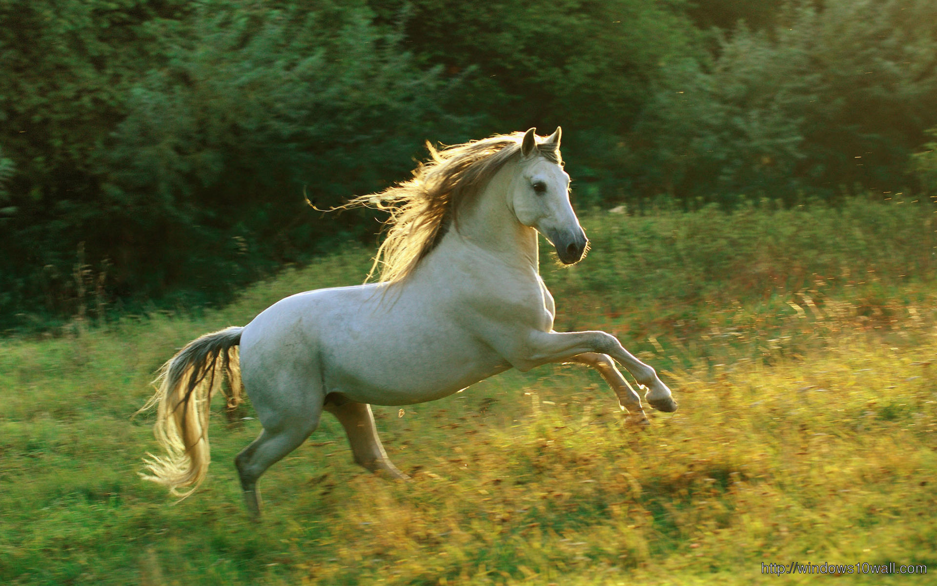 Running horse pic windows 10 wallpapers for Window horses