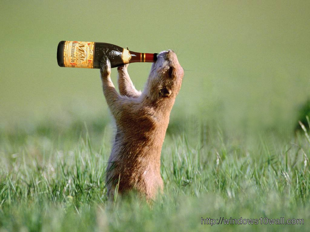 Funny animal having some beer wallpaper