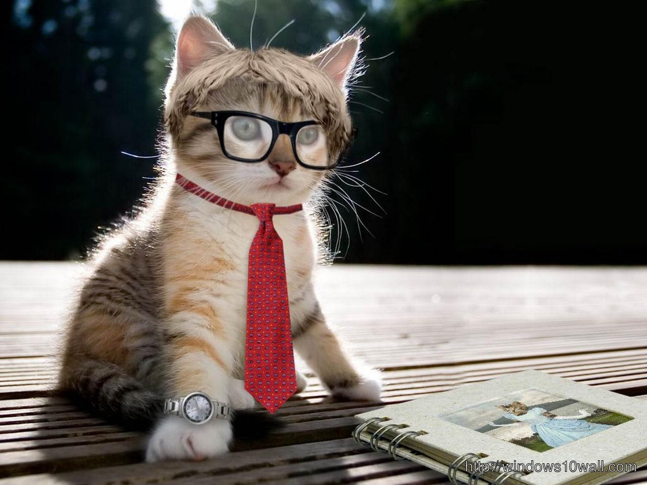 Funny Teacher Cat Wallpaper
