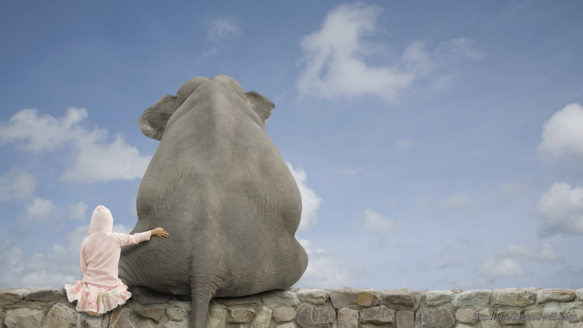 Funny Elephant Picture