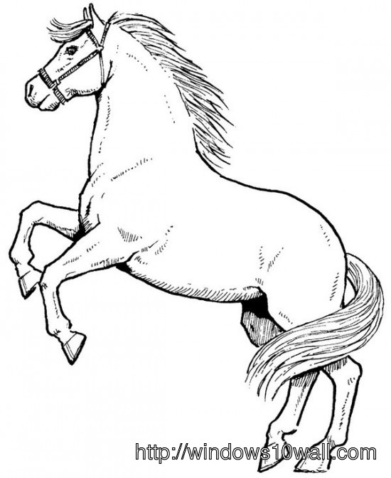 Horse Coloring Page for Kids Wallpaper