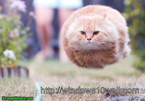 Funny cat flying in the air wallpaper