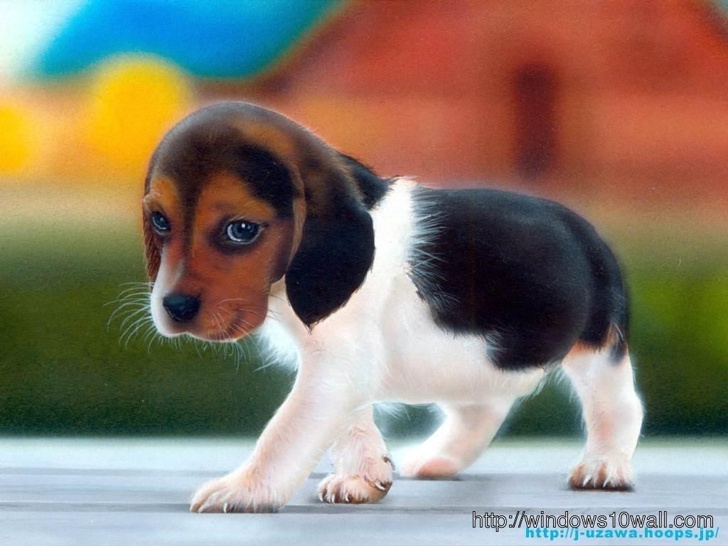 Best Puppy Wallpaper Download
