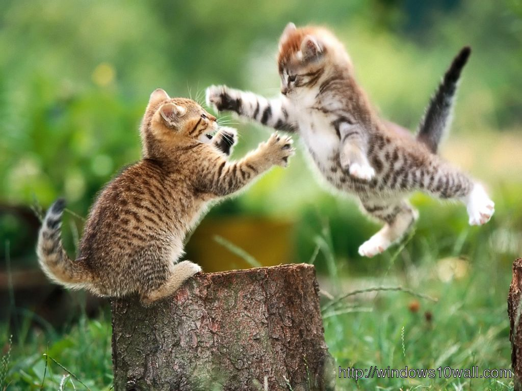 Funny Cat WWE Wallpaper