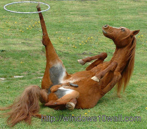 Funny Horse Flip Down Side Wallpaper