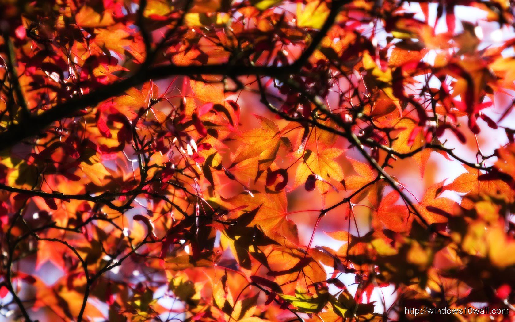 Fall Desktop Background Wallpaper