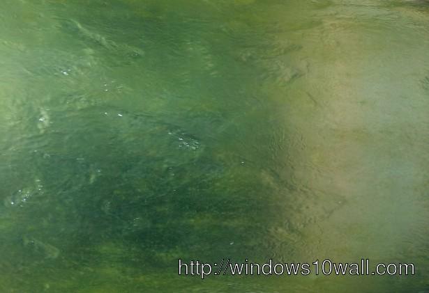 Green Jade Background Wallpaper