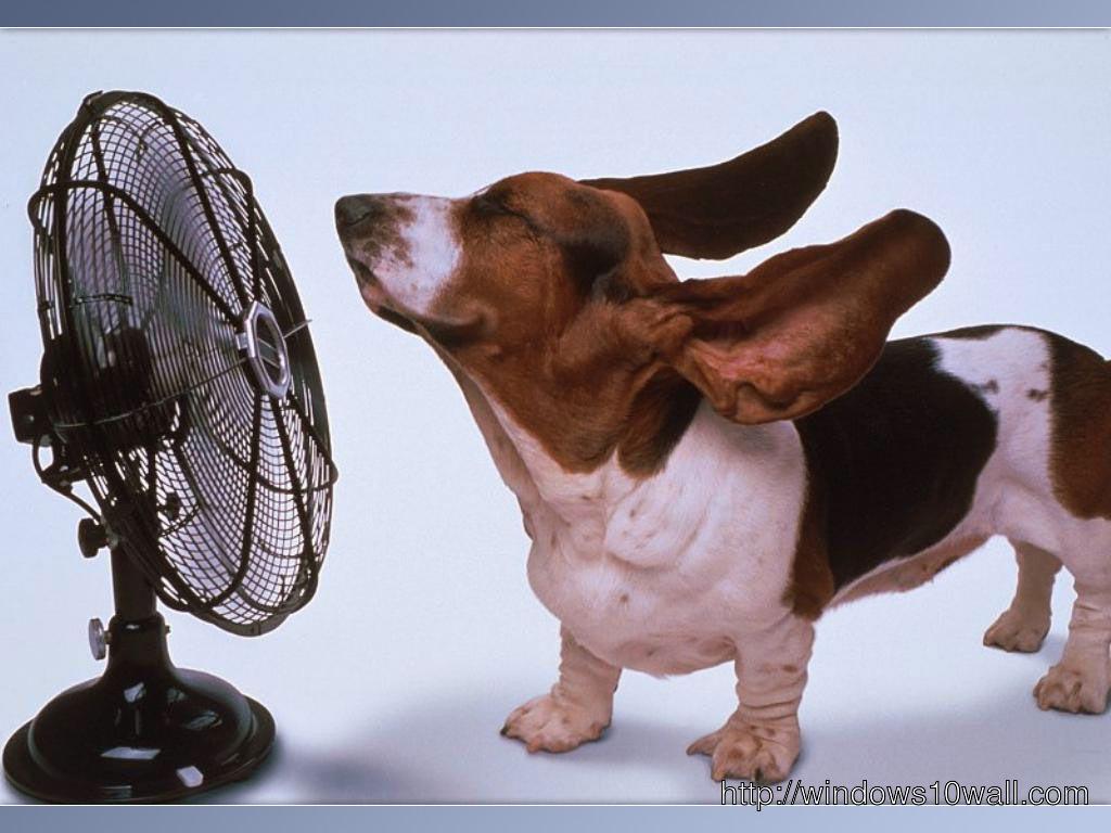 Funny Dog Getting Fan Air Wallpaper