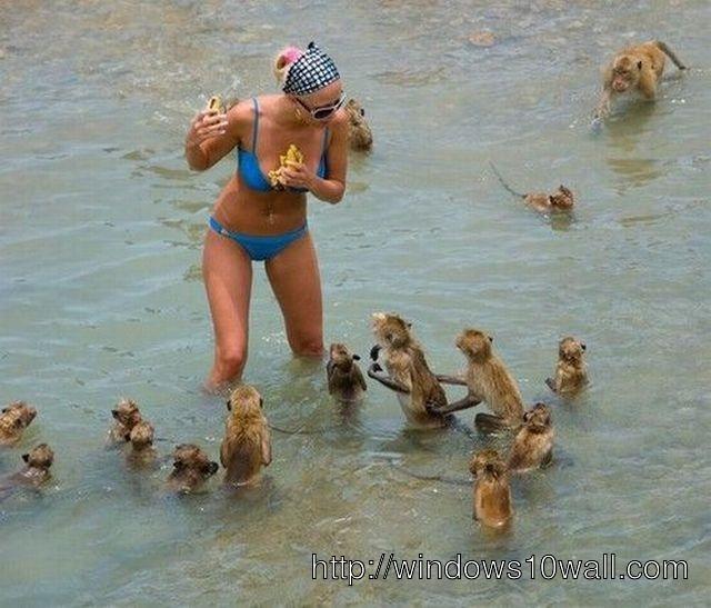 Funny Monkeys Banana Fight Wallpaper
