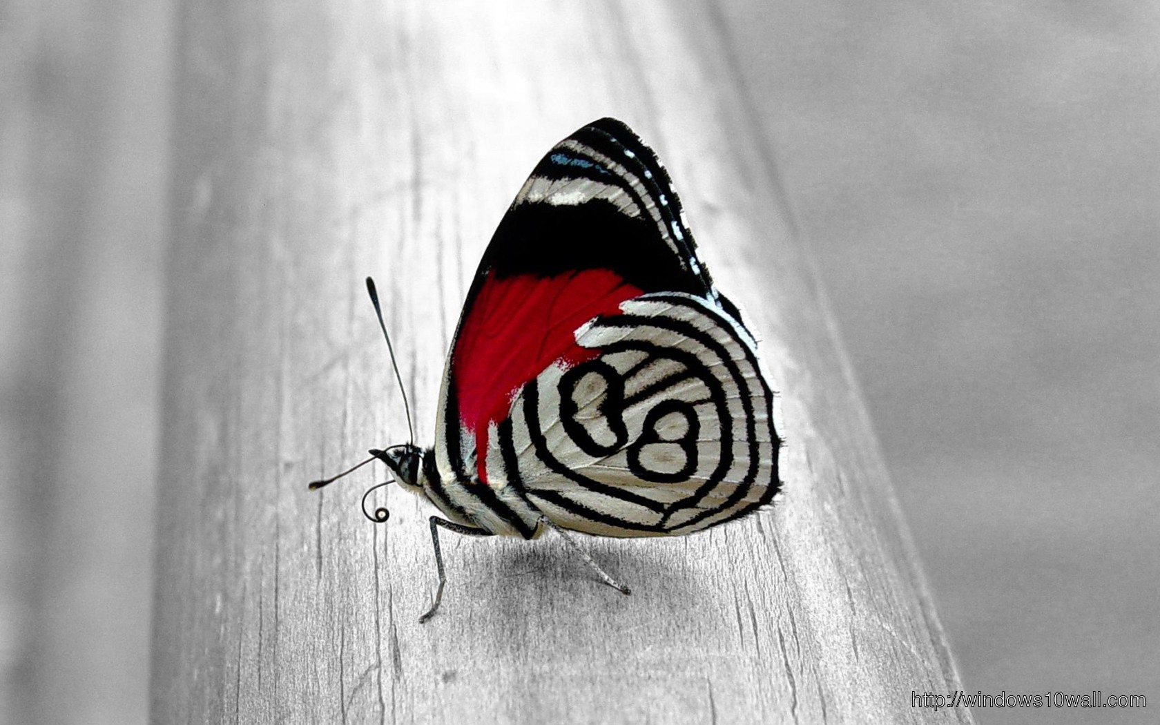 Unique Butterfly Background Wallpaper