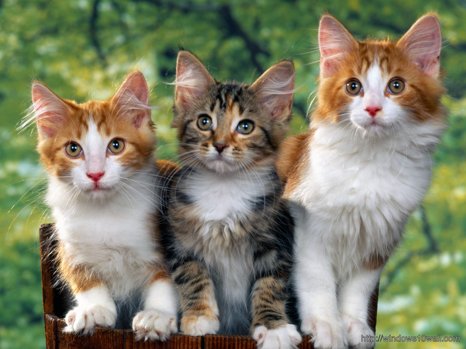 3 Lovely Cats Background Wallpaper