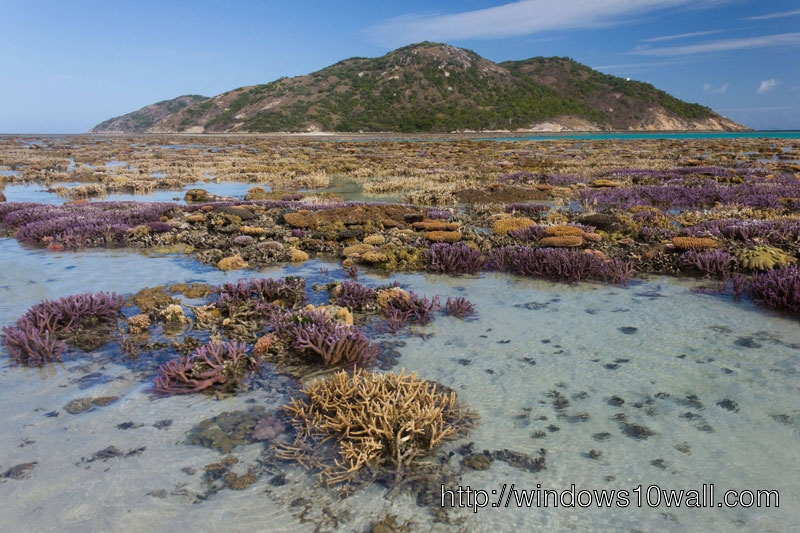 Coral Garden at Low Tide Wallpaper