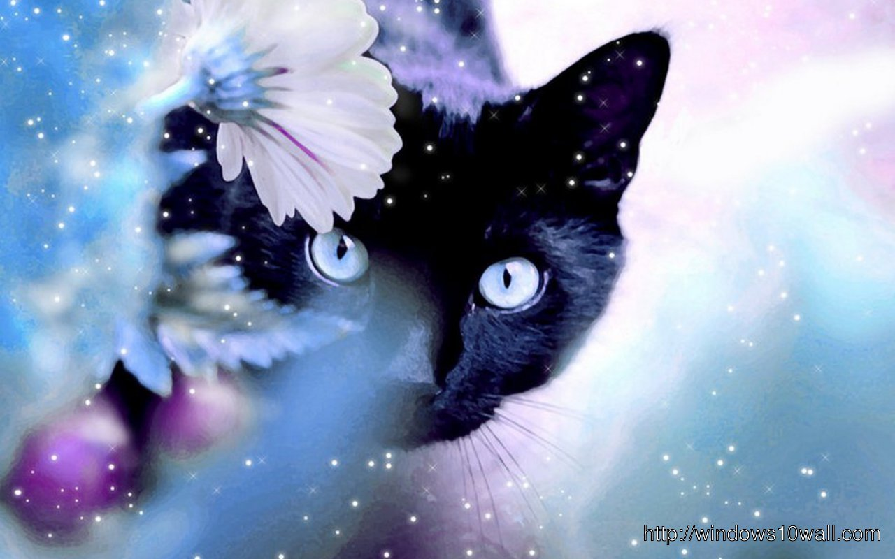Beautiful dark black cat background wallpaper windows 10 for Gatti sfondi desktop gratis