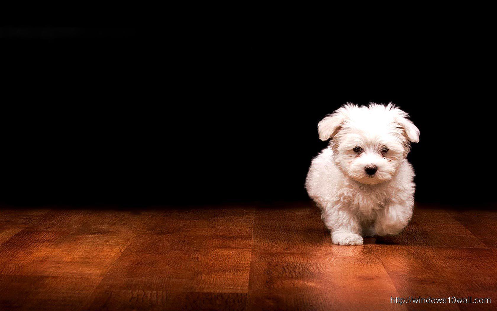Beautiful Puppy Black Background Wallpaper
