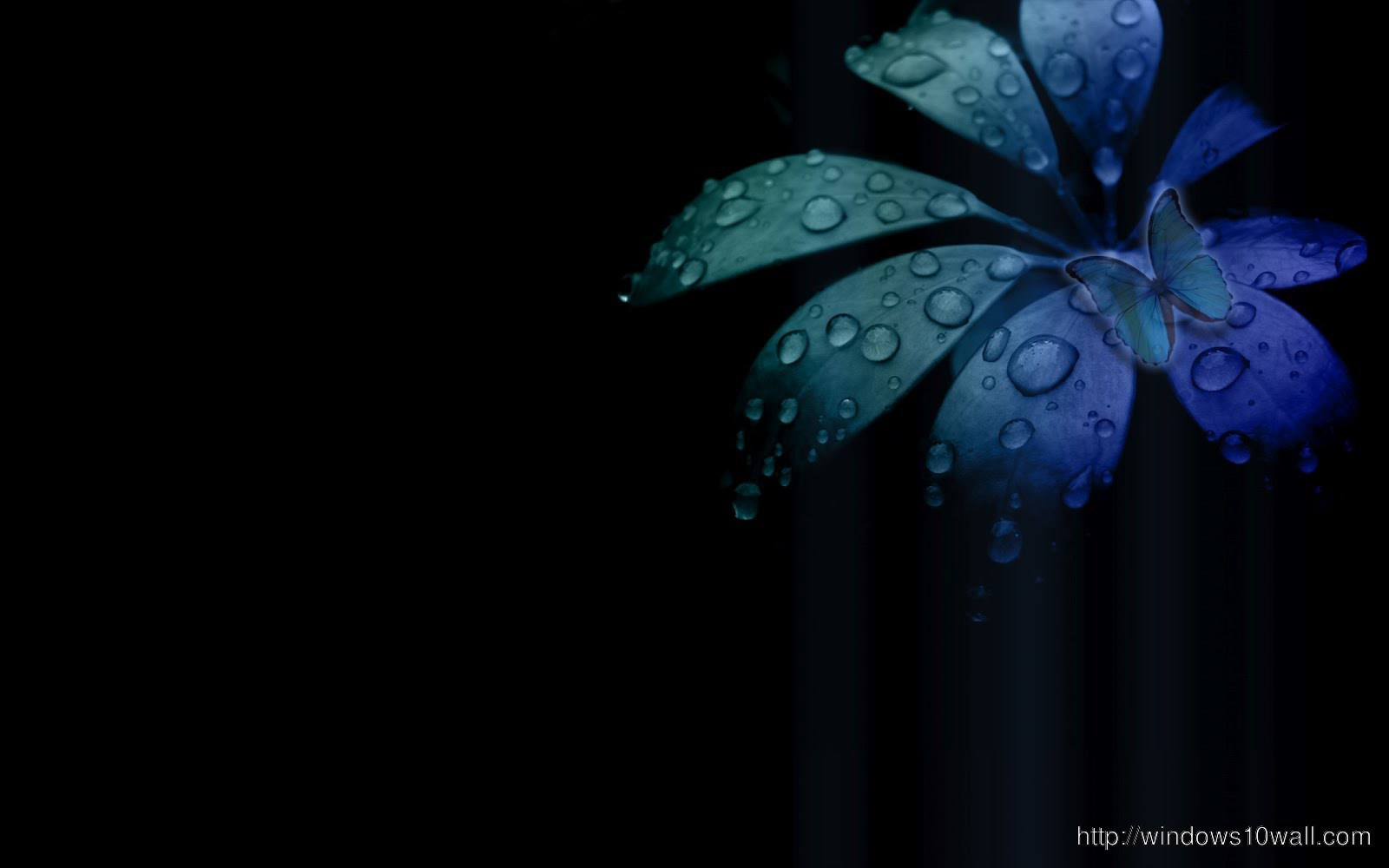 Cool Abstract Flower Black Background Wallpaper