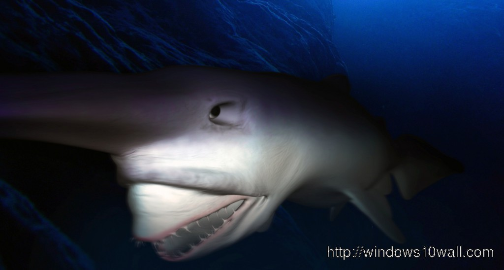 Goblin Shark Background Wallpaper Windows 10 Wallpapers