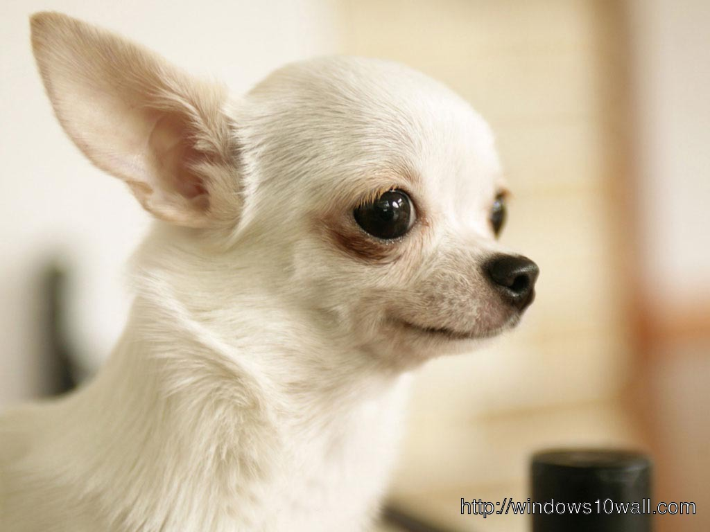 Cute Dog Small For Android Wallpaper