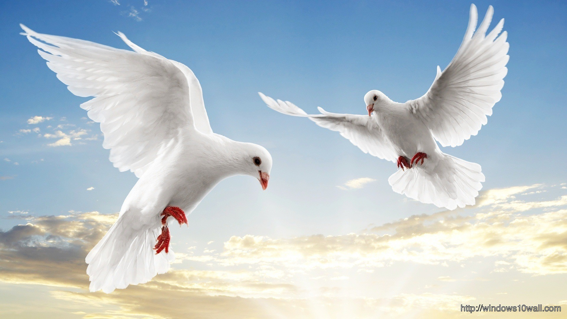 Flying Pigeon Couple HD Wallpaper