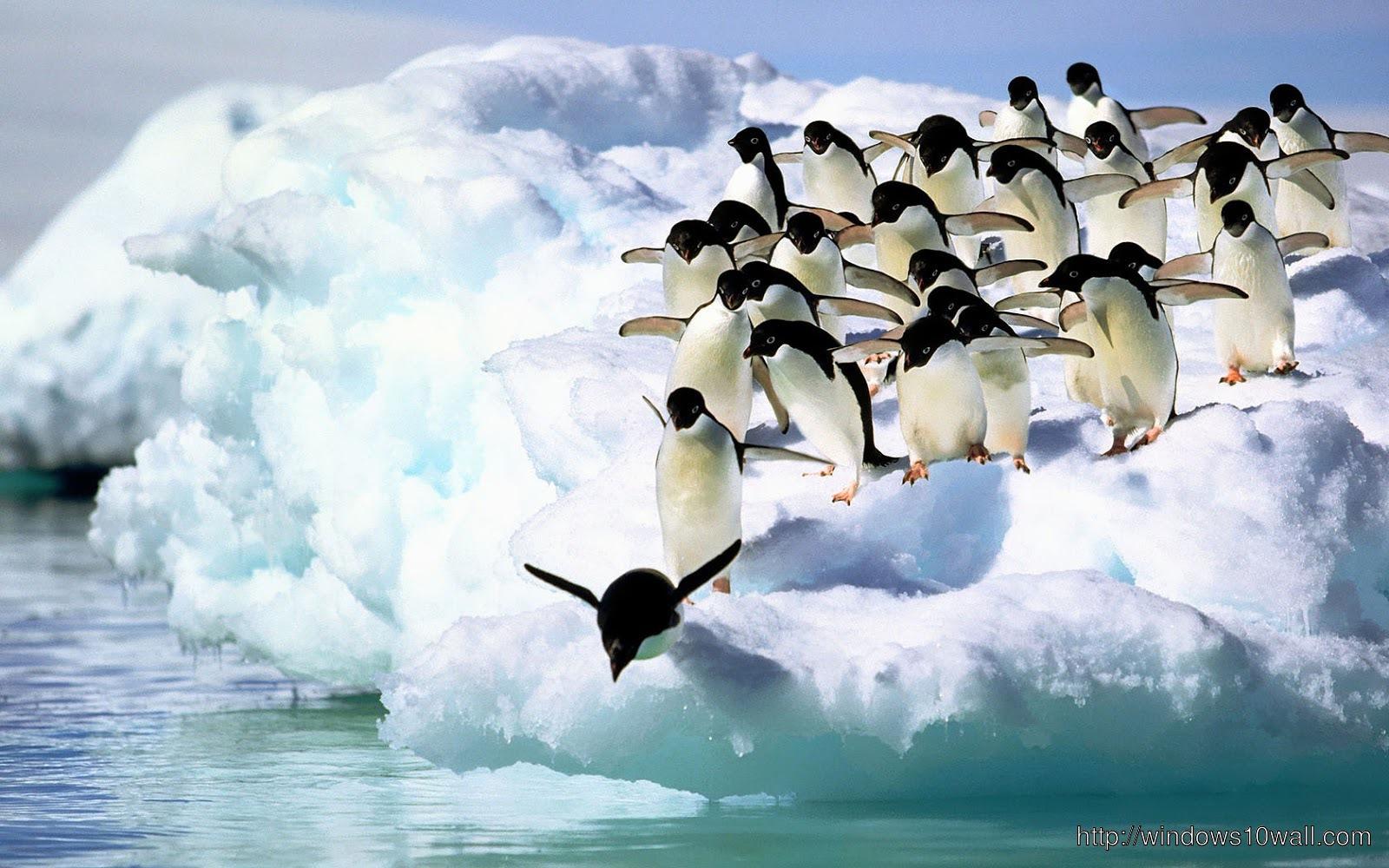 pittsburgh penguins iphone 4 wallpaper