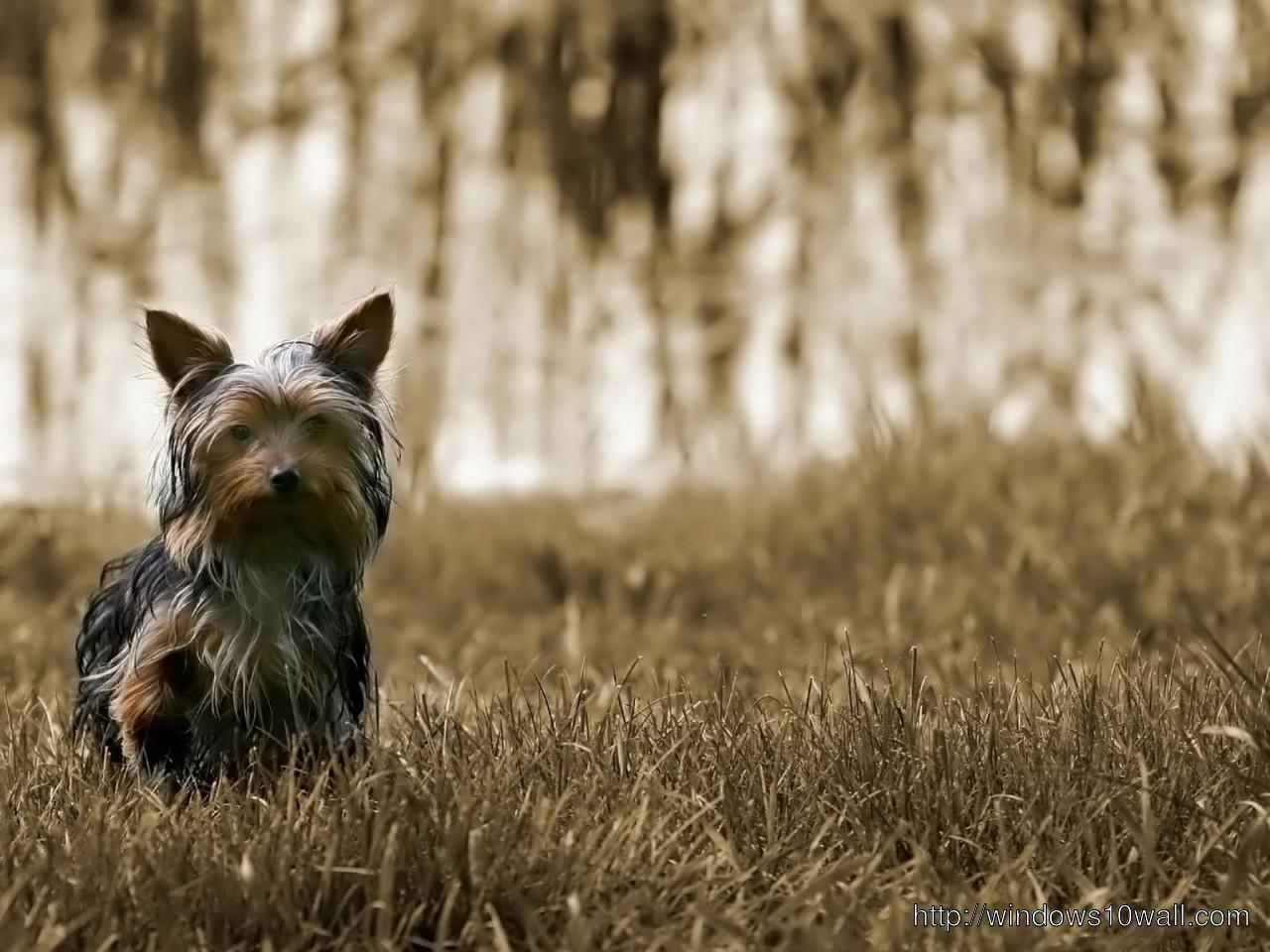 Small-dog-1280x960-hd-Wallpaper