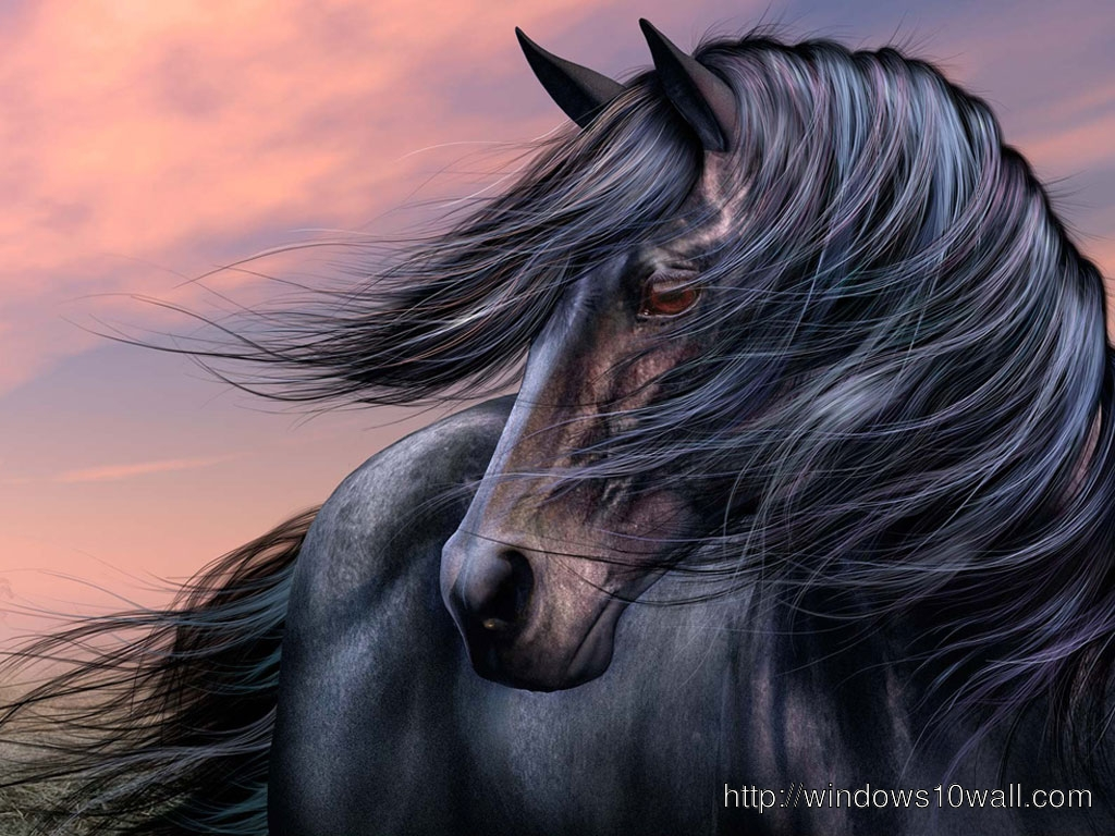 Stunning Black Horse Wallpaper Windows 10 Wallpapers