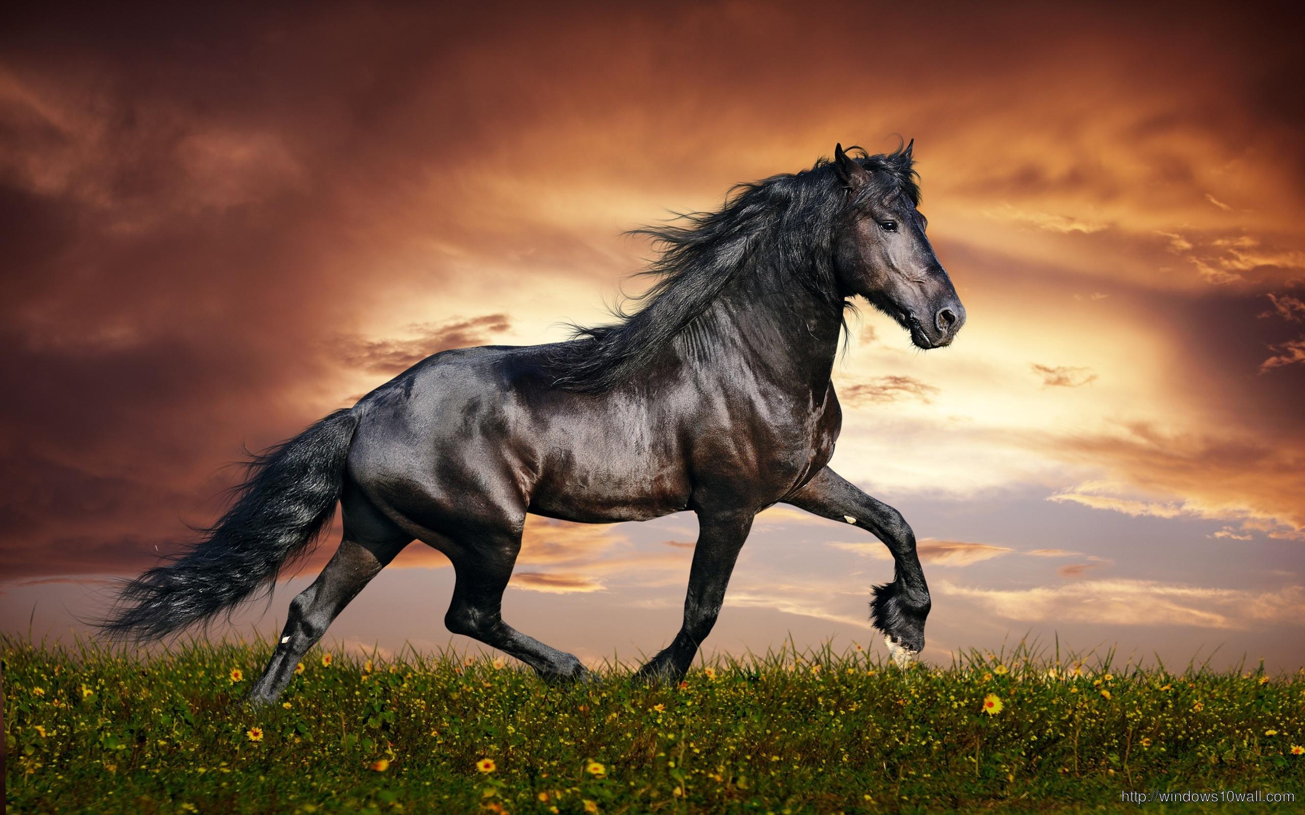 Beautiful Dark Arabian Horse Hd Wallpaper Windows 10 Wallpapers
